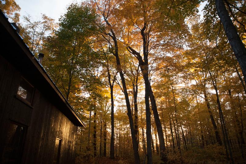 L'érablière s'habille de ses couleurs d'automne